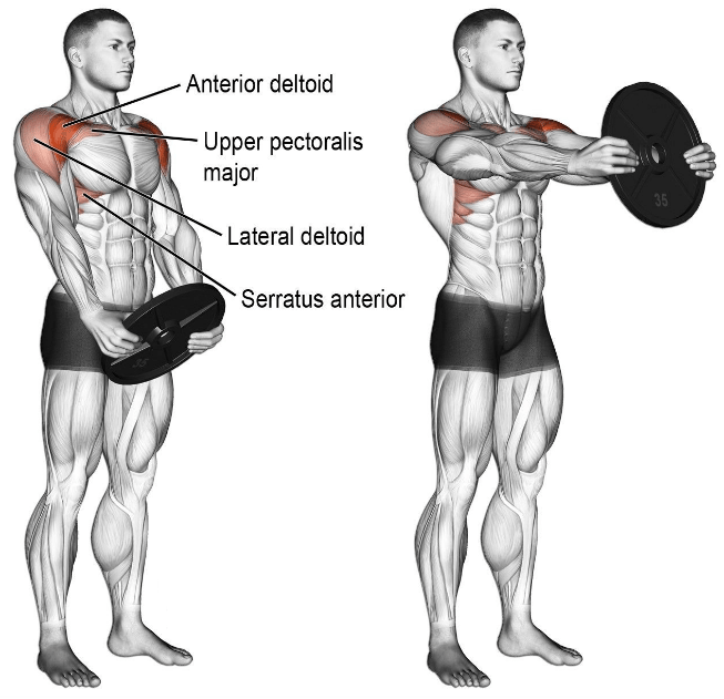 Work for Each Muscle Group