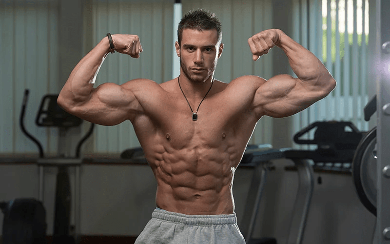 muscle construction