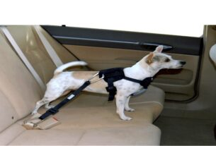 Dog Harnesses for Cars