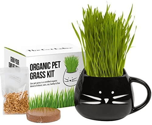 Cat Grass Growing Kit with Organic Seed, Organic Soil, and Cat Planter